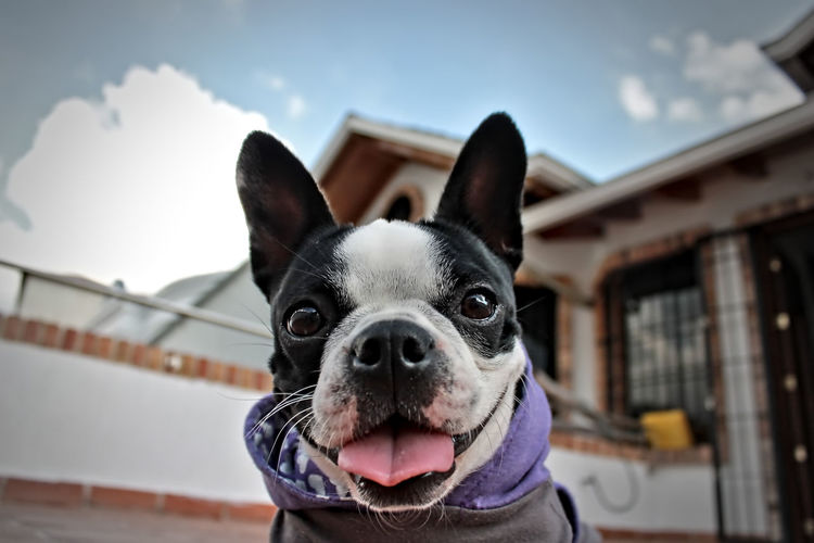 Close-Up Portrait Of Dog Against Building