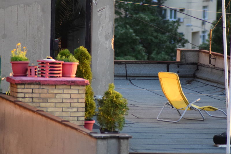 Decoration Garden Gardening Hot Day My New Best Friend :)) Pots Rofftop Roof Top Sommergefühle Summer In The City Sunset Watching Urban Gardening Paint The Town Yellow