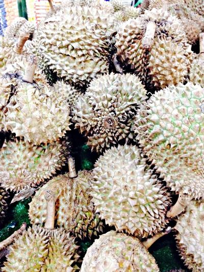 Fruit of Durio kutejensis, commonly known as durian merah ^.^