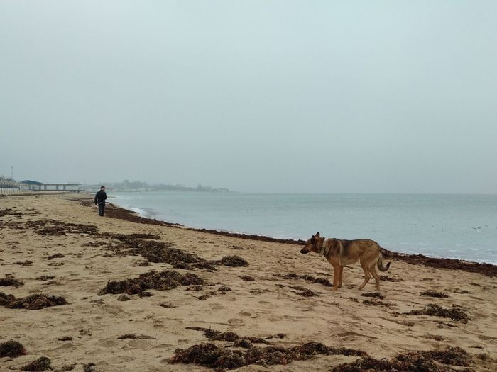 Alone Loneliness Man Water Pets Sea Beach Dog Sand Sky Horizon Over Water Calm Sandy Beach Mid Distance Fog Foggy Idyllic Tranquil Scene Tranquility