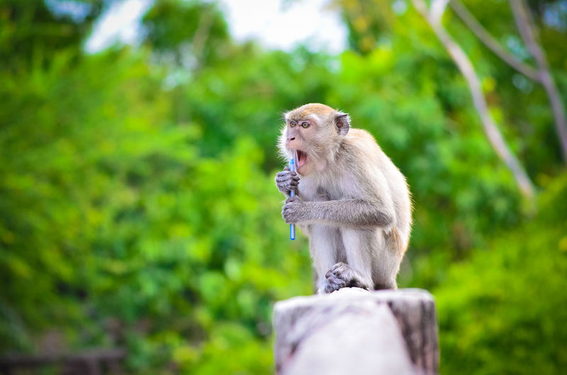 Portrait of monkey against blurred trees