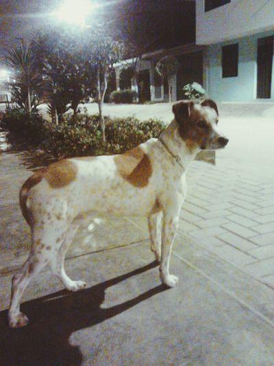Handsomedog Ilovemydog Mydog