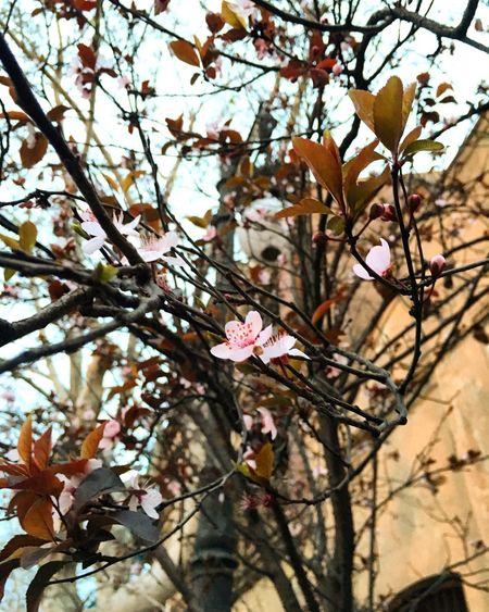 Taking Photos Relaxing Spring Has Arrived Spring Flowerblossom Flowers Tree