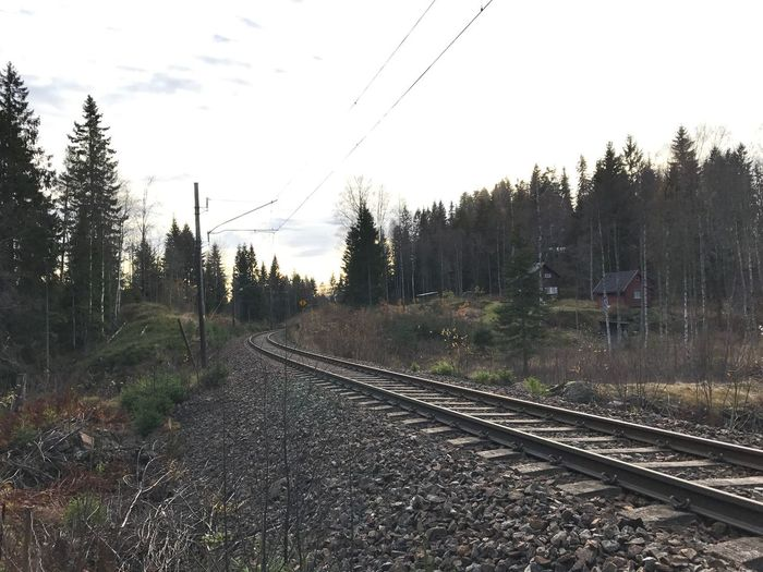 Train track in the woods. Railroad Track Transportation Outdoors No People Electricity Pylon Railroad Track Rail Transportation Fall Leaves