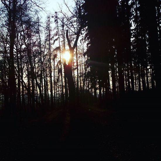 Nice Tree Sunset Sunshine Sunny Sun Atforest Forest Atdogwalk Dogwalk Cool NotBad