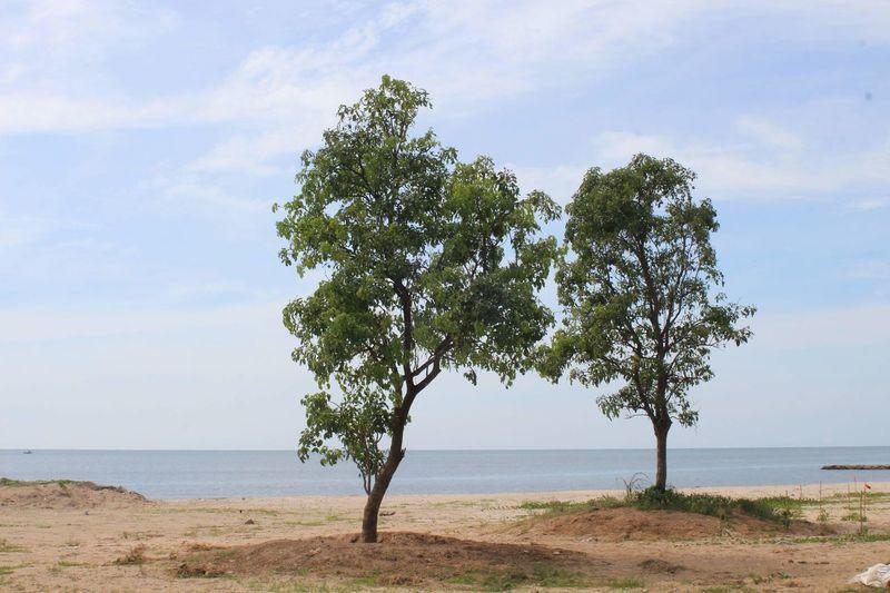 Tree by sea against sky