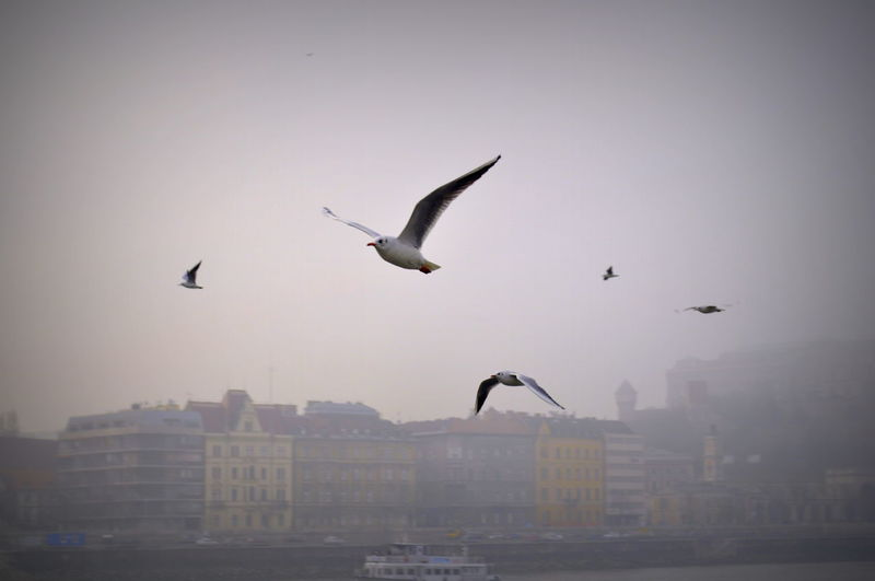 Seagulls flying over city