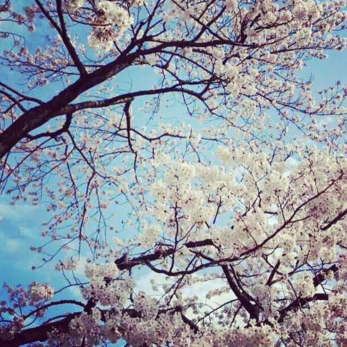 Spring Flowers Learning Working Springtime Cerezo Loveisintheair