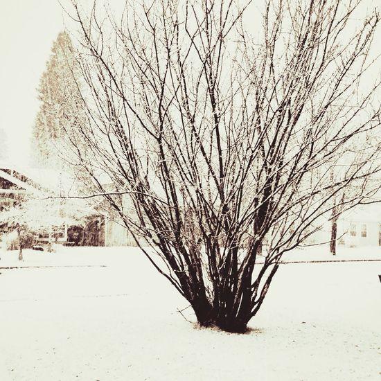 Snow Inbend