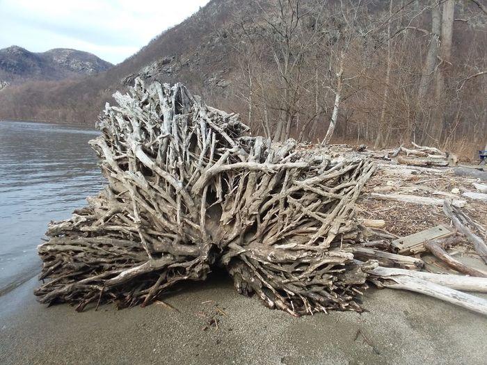 Dead tree on riverbank