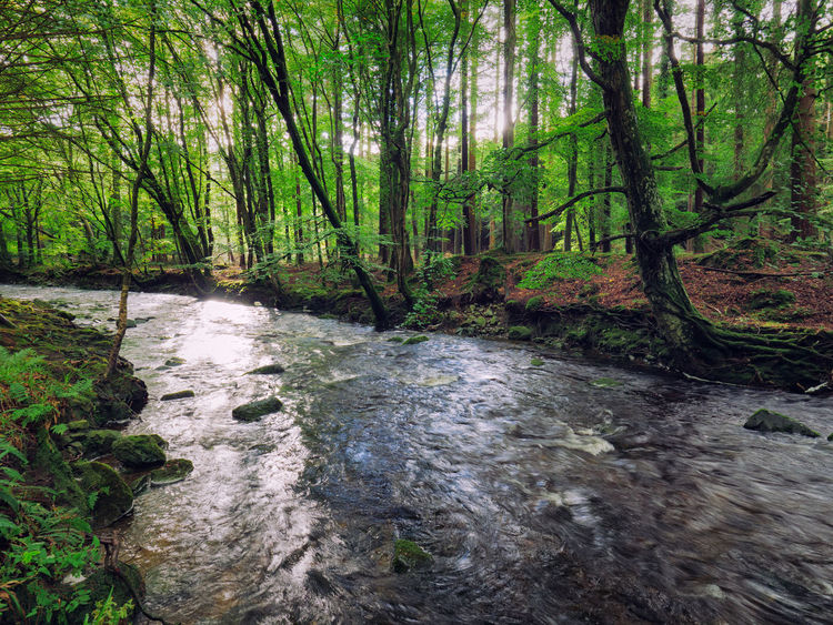 Northern Ireland Tollymore Forest Park Beauty In Nature Day Forest Green Color Landscape Lush Foliage Moss Nature No People Outdoors River Scenics Sky Tranquil Scene Tranquility Travel Destinations Tree Tree Area Tree Trunk Water WoodLand