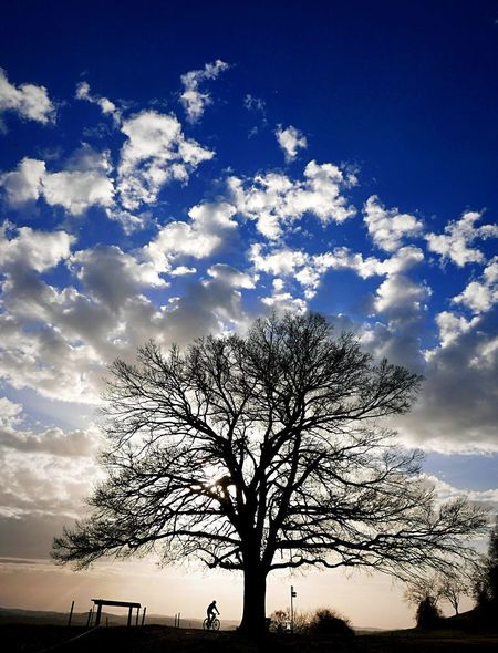 Cyling Tree Sunset Blue Sky Amazing View Eye Em Nature Lover