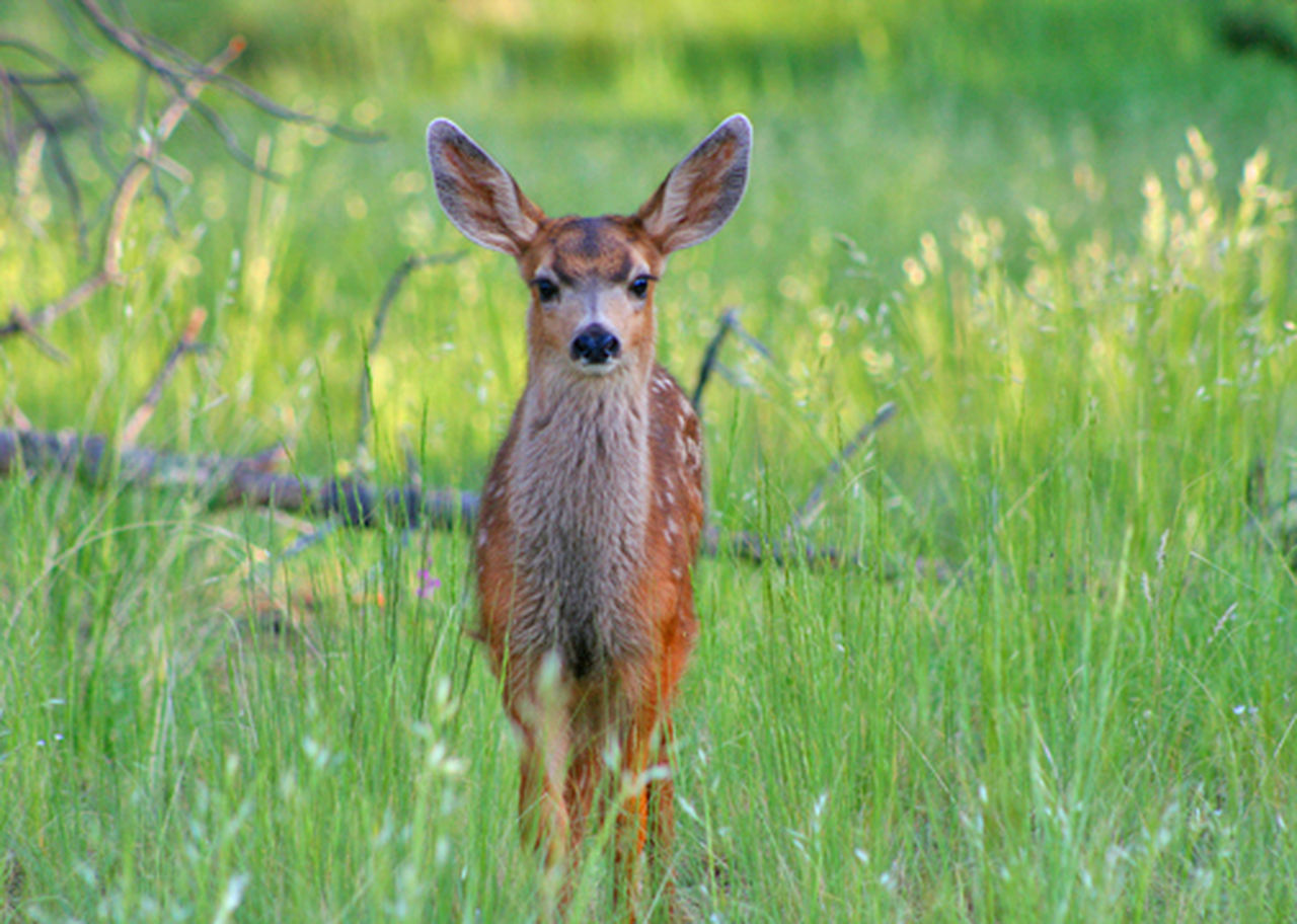 grass, animal themes, one animal, animal wildlife, animals in the wild, looking at camera, field, mammal, day, nature, portrait, green color, young animal, outdoors, no people