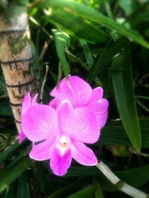 ดอกกล้วยไม่ กล้วยไม้ Orchid Flower Purple Pink Color Freshness Beauty In Nature Petal Fragility Nature Growth Flower Head Close-up Plant No People Blooming Outdoors Day Passion Flower Vanda