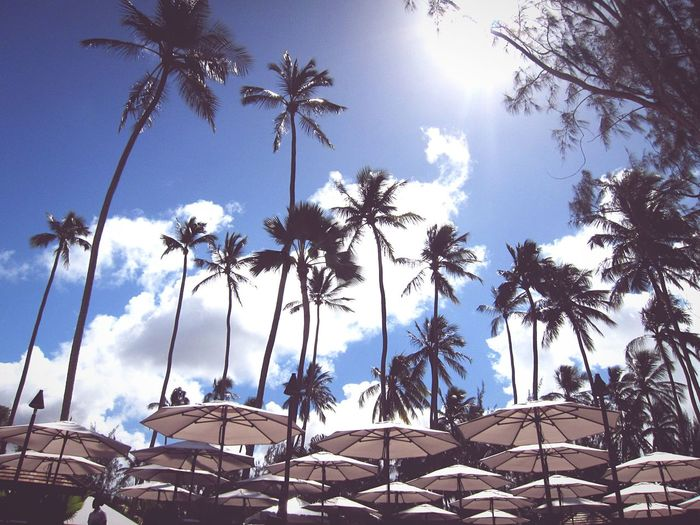 Beach Relaxing Vacation Blue Sky Clouds Travel Parasol Trees Palmtrees The Great Outdoors With Adobe The Essence Of Summer Fine Art Photography The Great Outdoors - 2017 EyeEm Awards An Eye For Travel