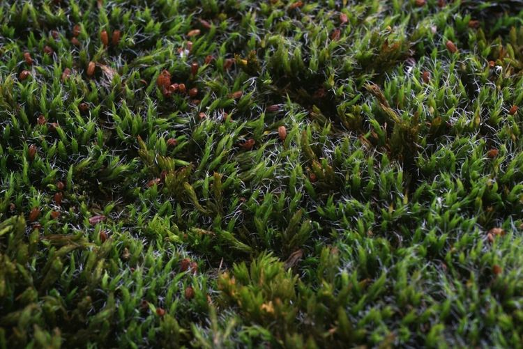 Full frame of moss at planten un blomen park