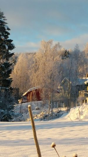 Winter in Norway 😊 Hanging Out Check This Out Hello World Relaxing Enjoying Life January 2016 Norway Norwegian Winter Snowsnowsnow.  Winter Nature_collection Norwegian Landscape EyeEm Nature Lover Nofilterneeded Eyem Best Shots Nature_collection Eyem Nature Eyem Best Shots
