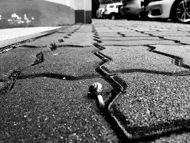 Snail Transportation Street Surface Level Road Outdoors No People Close-up Nature EyeEm Selects Streetphoto_bw Monochrome Blackandwhite After The Rain City Life IPhoneography EyeEmNewHere