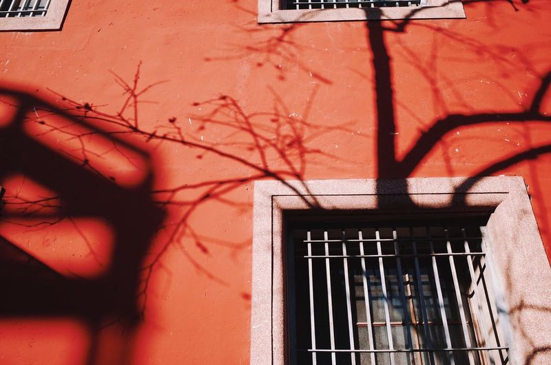 Window Tree Light And Shadow Beijing Red Built Structure Building Exterior Architecture Wall - Building Feature Building No People Wall Shadow Sunlight Day Nature