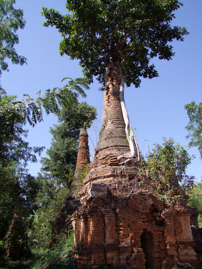 Tree growing on Ancient Stupa - one of 2,257 stupas on this 11th to 13th century site Ancient Civilization Ancient History Ancient Stupa Brick Structure Buddhist Architecture Buddhist Stupa Composition Full Frame Growth Inle Lake Kakku Myanmar No People Old Ruins Outdoor Photography Place Of Worship Religion Shan State Sunlight And Shadows Tree Unusual