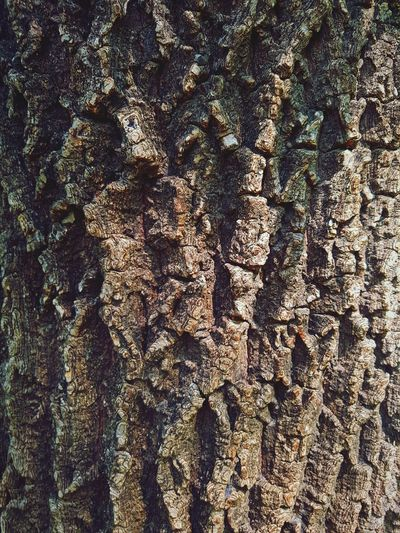 Natural Beauty Texture Nature Outdoors Trees Wood Bark Texture