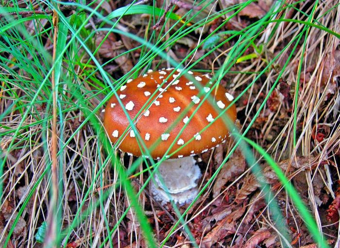 Mushroom Outdoors Nature Beauty In Nature Mushrooms 🍄🍄 Mushroom_pictures Mushrooms Nature Mushroom Hunting Mountain Beauty In Nature Mushrooms Magic. Mushroom Collection Mushrooms Gallery Mushroom Photography гъби