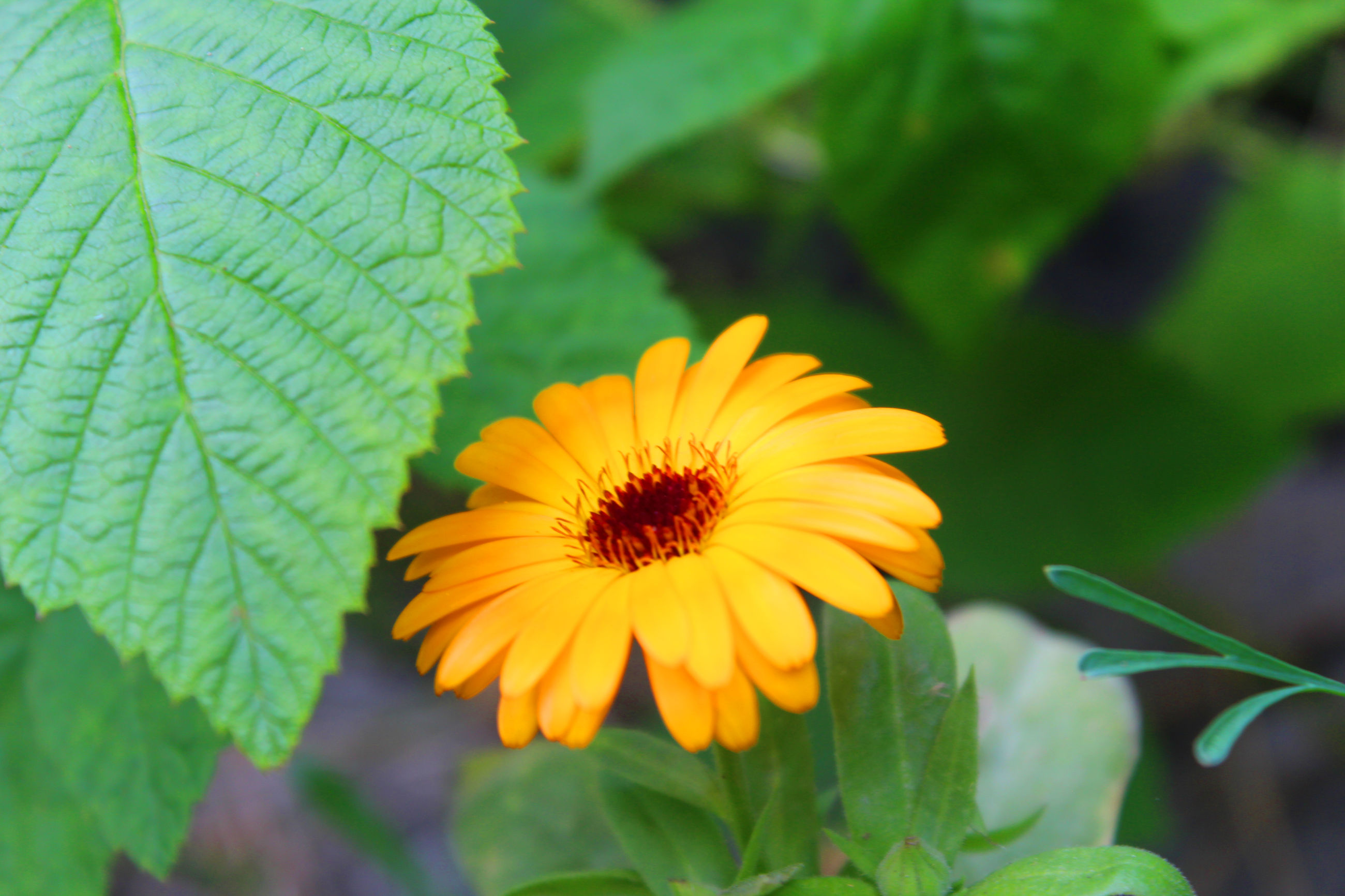 flower, freshness, petal, flower head, fragility, growth, leaf, yellow, beauty in nature, blooming, close-up, plant, focus on foreground, nature, pollen, single flower, orange color, in bloom, green color, blossom