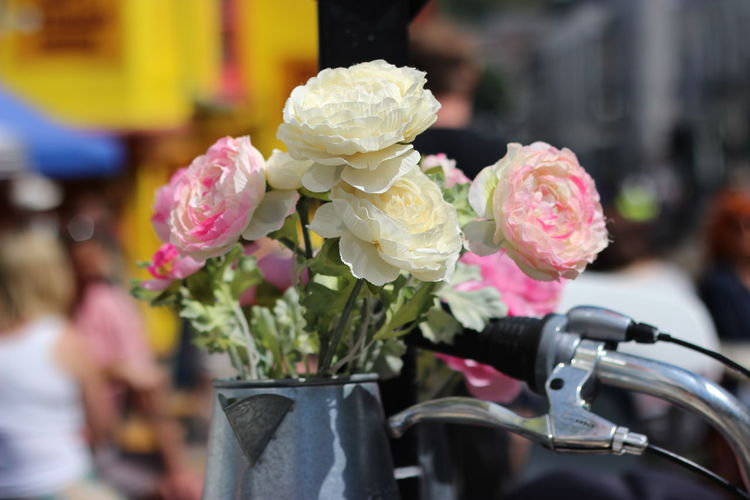 Close-up of pink rose flower pot
