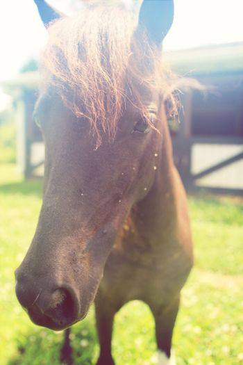 Ally the mischievous mini horse My Best Friends Are Animals