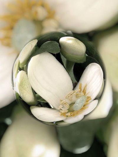 Flowerporn EyeEm Best Edits Tesoro En El Marmol Abstract marblecam