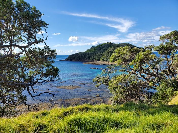 Goat Island, New Zealand 🇳🇿 Island Sea Trees Grass Goat Island Goat Island Marine Reserve Plant Sky Water Nature Beauty In Nature Growth Tree Day Tranquility No People Scenics - Nature Cloud - Sky Green Color Land Sunlight Outdoors Tranquil Scene Idyllic Sea My Best Photo
