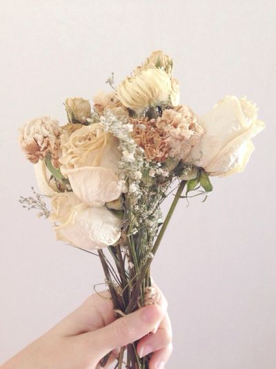 Close-up of hand holding flower over white background