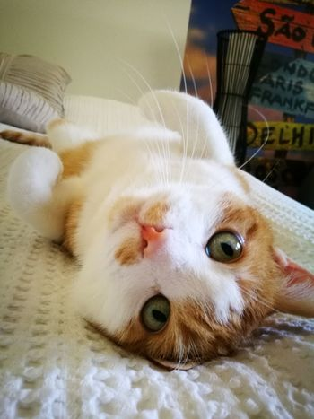 Someone is trying to be very cute😻 Animal Themes Looking At Camera Amateurphotography Cat Curiosity Lying Down MyLove❤ Cat♡ Veikkola Finland_photolovers TryingToBeCute Cutest Cats
