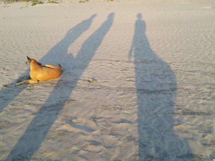 Silhouette Silhouettes Light And Shadow Beach On The Beach Dogslife Arambol Beach South India Goa Pivotal Ideas