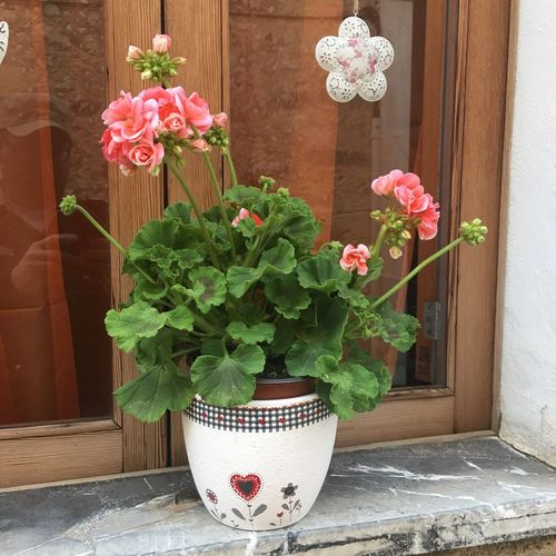 IZoOoM Blumentopf Blumen Flower Potted Plant Plant No People Pink Color Window Box The Still Life Photographer - 2018 EyeEm Awards