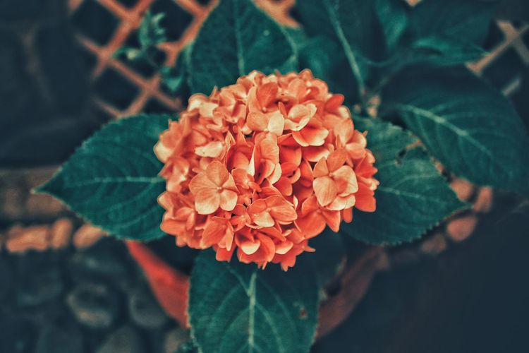 Close-up of orange flowers in back yard