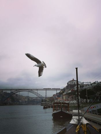 Bird Flying Animals In The Wild One Animal Animal Wildlife Animal Themes Outdoors No People Nature City Cloud - Sky Sea Insect Water Sky Bridge - Man Made Structure Beauty In Nature Day Pelican Pontedluis Ponte Luis I Vila Nova De Gaia Serra Do Pilar