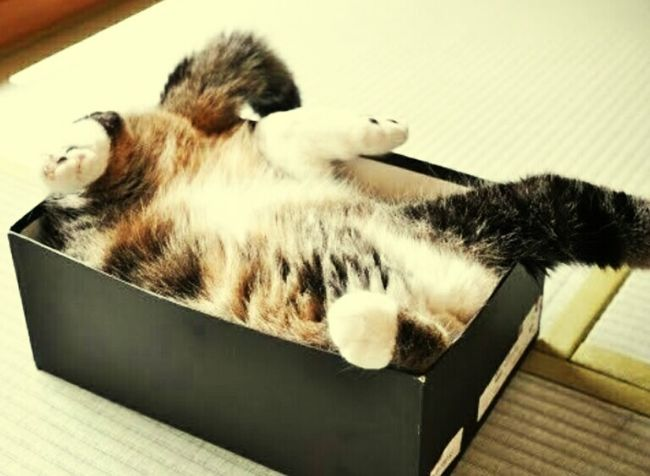 Off to bed. I mean box...
