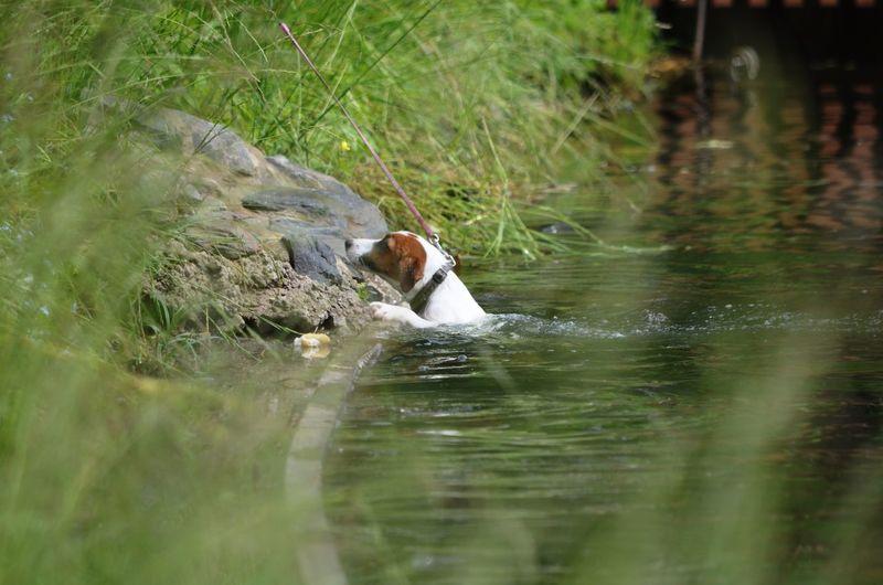 Round Pond Dog Dog In Water Green Water
