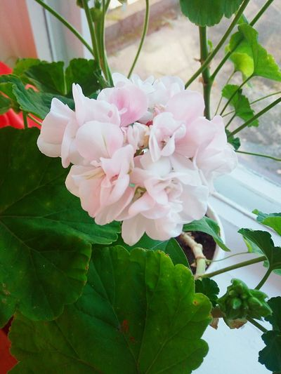 Flower Beauty In Nature Nature Day Plant Pink Color Likeforlike Lifestyles GoodTimes Goodday👍👋 Alone Love Nature Only Happy Cool Instago Instafollow follow #f4f #followme #TagsForLikes #TFLers #followforfollow #follow4follow #teamfollowback #followher followbackteam followh