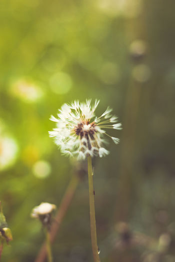 Attention to detail! Nature Close-up Freshness Plant Beauty In Nature Springtime Creative Photography Nikon Check This Out EyeEm Nature Lover Photooftheday Details Capture The Moment. Taking Photos Exploring Scenic Lomography Macro Dandelion
