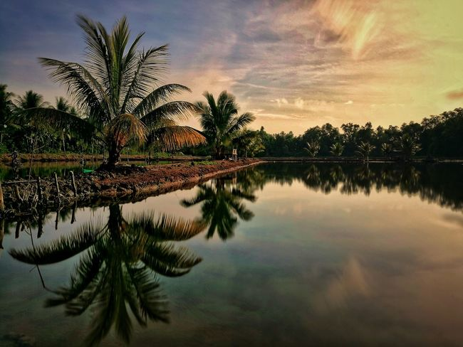 just nature reflection.. Reflection Landscape Landscape_photography Nature Photography Nature Morning Sky Morning Sunrise Sunset Sunrise_sunsets_aroundworld Sunrise And Clouds Sunrise Colors Sunriseporn Nature Photography Wonderful Indonesia WeLoveBalikpapan EyeEmNewHere Sunrise_Collection Tree Water Palm Tree Lake Silhouette Reflection Sky Cloud - Sky