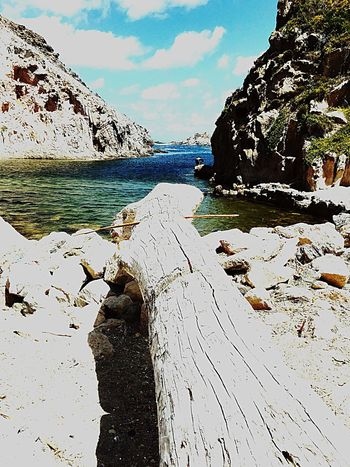 EyeEm EyeEm Nature Lover Summer #beach Sardegna Tronco Mare