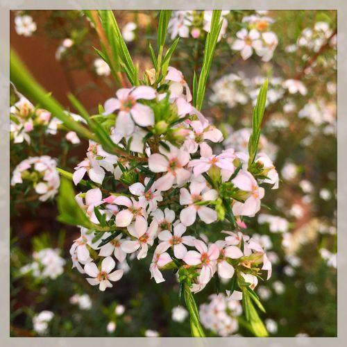 Flower's with raindrops 🌺💦🍃 #flowers #garden #raindrops #nature #pretty 🌺💦🍃