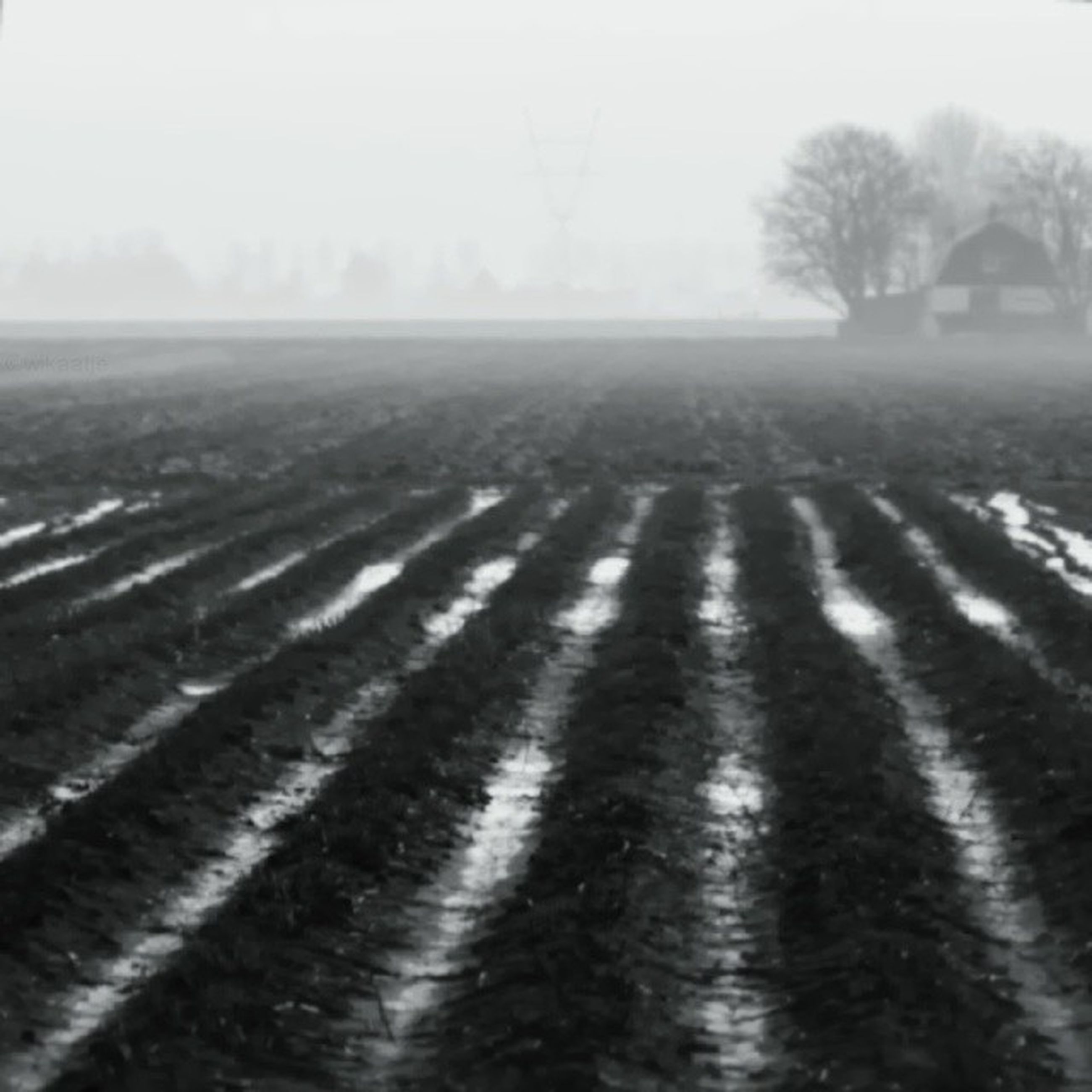 landscape, field, tranquil scene, tranquility, clear sky, agriculture, rural scene, nature, scenics, beauty in nature, farm, tree, weather, day, foggy, sky, outdoors, copy space, no people