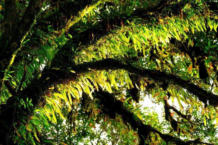 Full frame shot of tree leaves