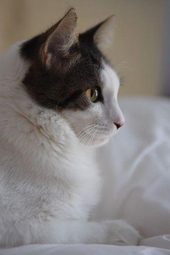Cat gatto Gatto Cats Gatti Cat Lovers Animals Animal Animal Photography Animal Themes Silhouette Profile Profilo Cat♡ Cats Of EyeEm