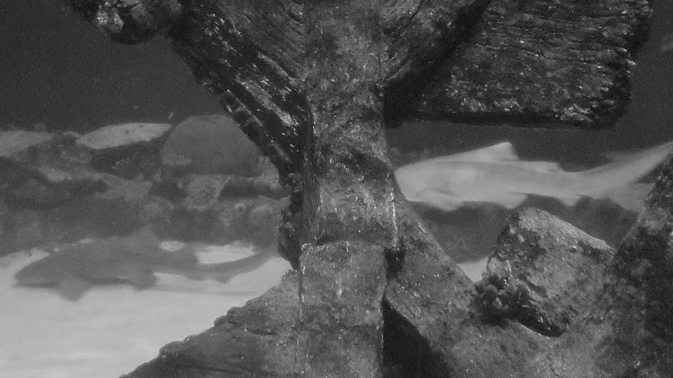 Underwater UnderSea Sea Swimming Water Scuba Diving Adult Nature EyeEm Selects EyeEmNewHere