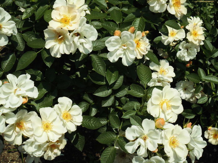 はな 花 植物 Beauty