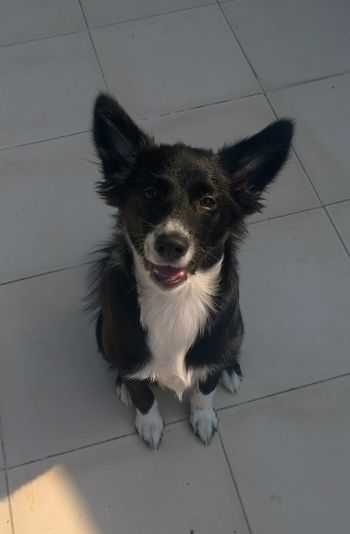Curiosity Cute Pets Cutness Dog Domestic Animals Looking At Camera Love Mammal Pets Sitting